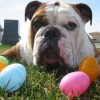 Plastic Easter Grass: A Danger to Pets