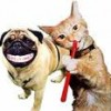 Strongsville Veterinarian Recommends Routine Pet Dental Care