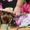 San Antonio | Pets dress up for Fiesta Fido event
