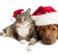 Keep Holidays Happy with Safe Gifts for your Pets