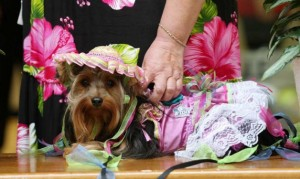 Dogs and owners competed for honors at the Fiesta Fidos and Fashion event