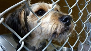 How do people select pets from animal shelters?