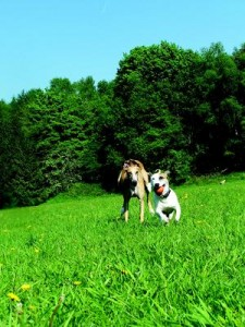 6 simple summer pet safety tips