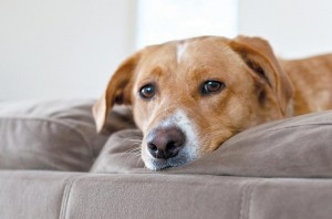 Summer sounds may stress your pet | Booms Bangs and loud noises