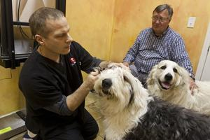 Pet owners should establish close relationship with their veterinarian