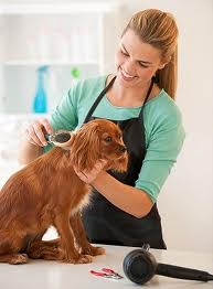 Follow Regular Pet Grooming to Keep Pets Healthy, Help Prevent Fleas
