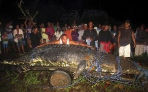 Philippines largest crocodile