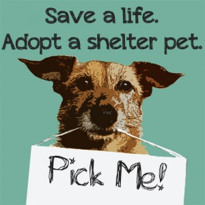 Save a life | Adopt a shelter pet