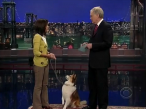 David Letterman - Stupid pet tricks