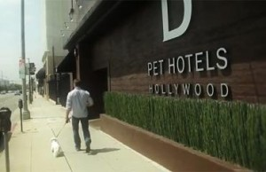 Luxury pet hotel industry expands into NYC