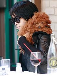 Rihanna and her dog out for lunch