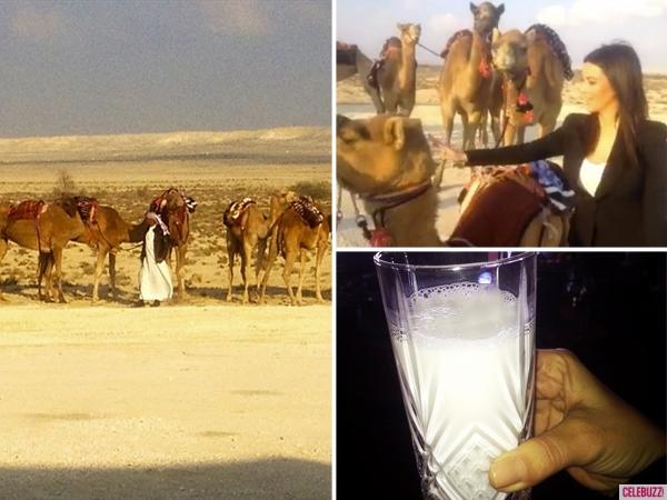 Kim-Kardashian Camels Bahrain