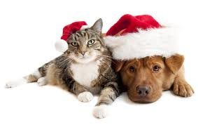 Dog Cat Santa Christmas